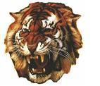 Grovedale Tigers 2