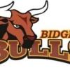 Bidgee Bulls Logo