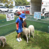 Farm Pics from Early Years Fun Day