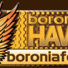 Boronia Hawks  Logo
