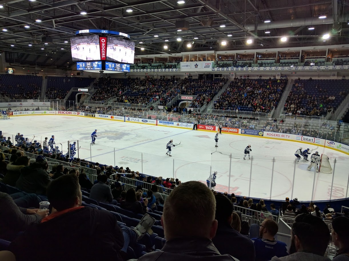 The Dingos take in the Marlies playing the Manitoba Moose